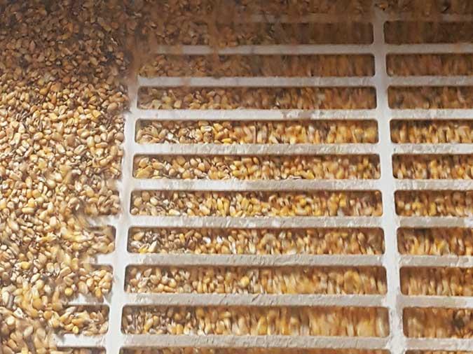 Aliments pour nos cochons : mélange de céréales