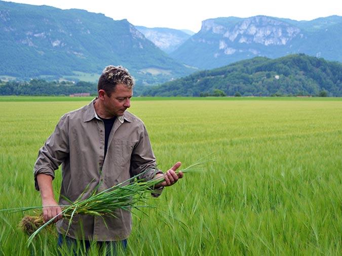 Production de céréales à la ferme